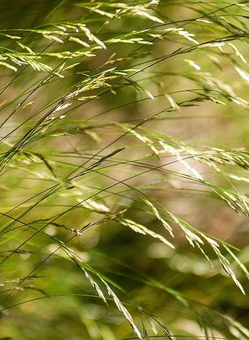 green-grass-2663562
